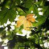 herfstblad, herfstkleuren