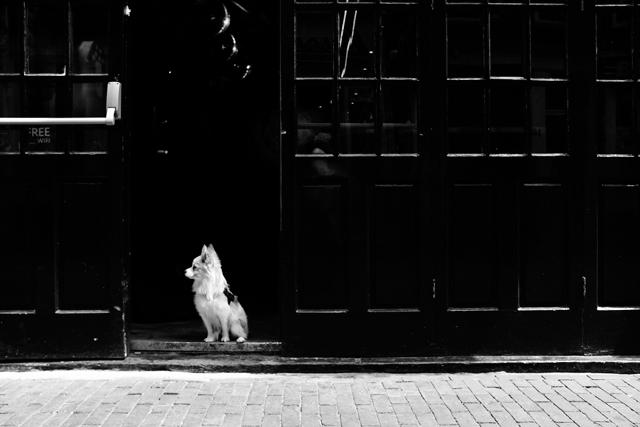 straatfotografie, amsterdam, halvemaansteeg, streetphotography