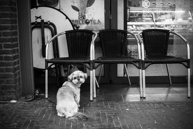 Straatfotografie, Den Haag, gedempte gracht, Streetphotography