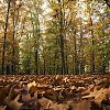 bladeren, herfst, veluwe, voorthuizen