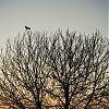 vogel, boom